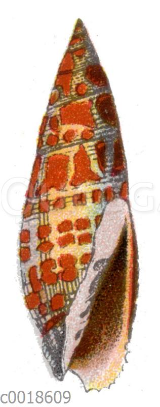 Bischofsmütze