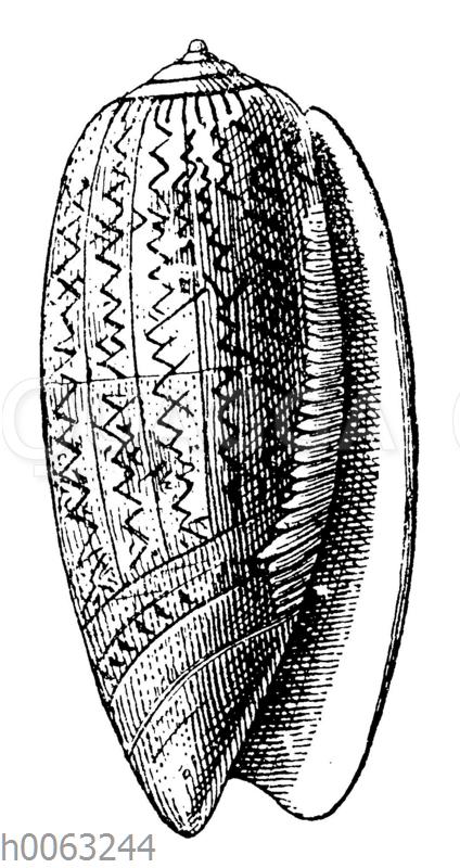 Porphyrwalze