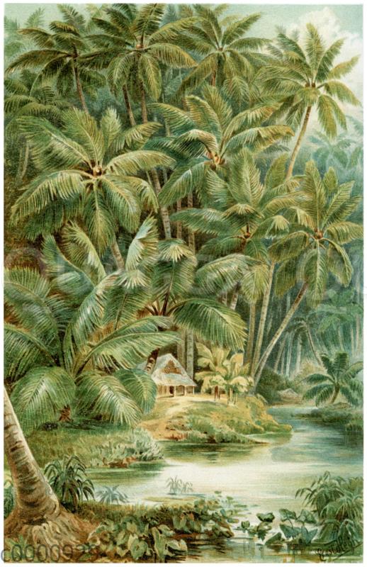 Kokospalmen auf Ceylon