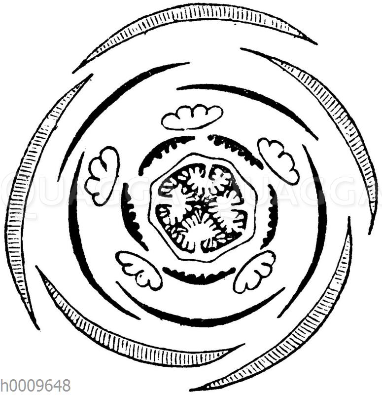 Sumpfherzblatt