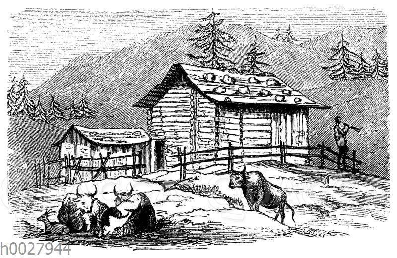 Sennhütte in den Tiroler Alpen