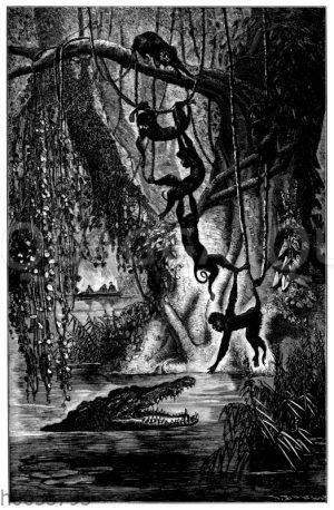 Affengrupe in einem amerikanischen Urwald