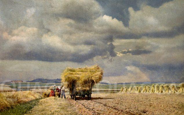 Getreideernte: Mit Garben beladener Erntewagen
